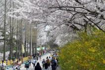 목포 유달산 봄 축제